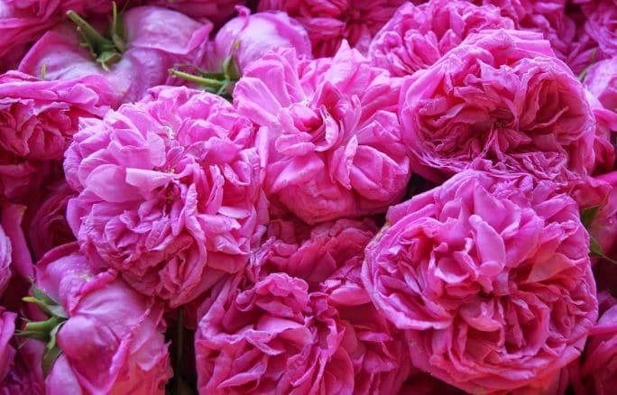 Γλυκό τριαντάφυλλο (Μαγιάτικο)