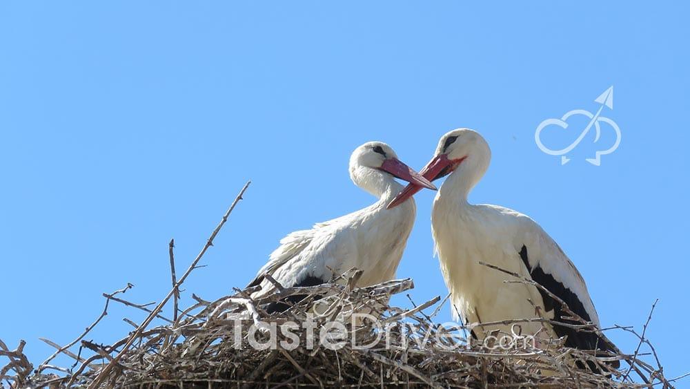 veroia-pelicans