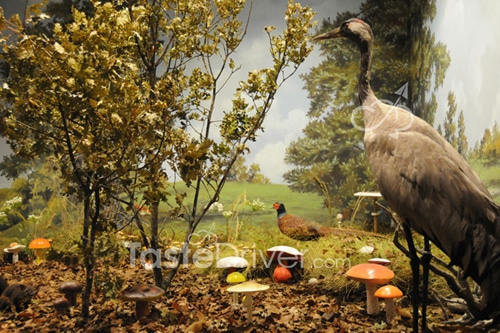 Κυνήγι τρούφας στα Μετέωρα