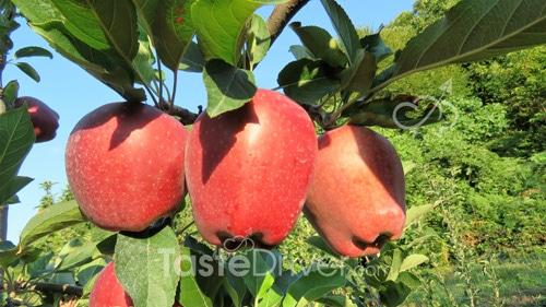 μηλιές