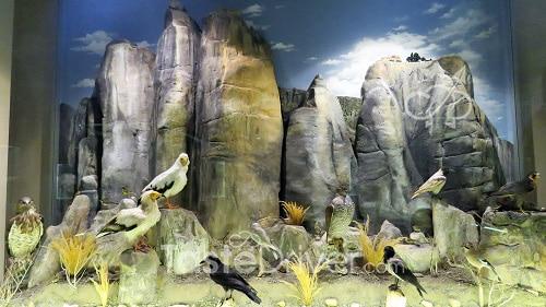 Μουσείο Φυσικής Ιστορίας και Μανιταριών οι φτερωτοί κάτοικοι των αιώνιων βράχων